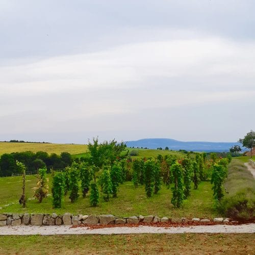 Wine Routes in Slovakia