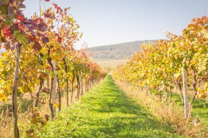 Wine tasting tour in Bratislava