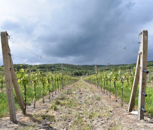 wine tasting slovakia